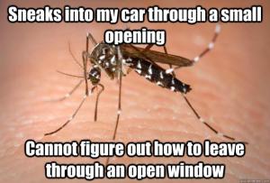 np_bug_2