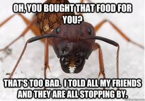 np_bug_3