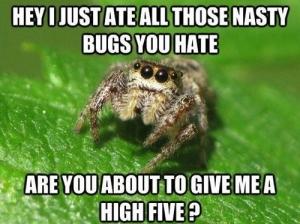 np_bug_7